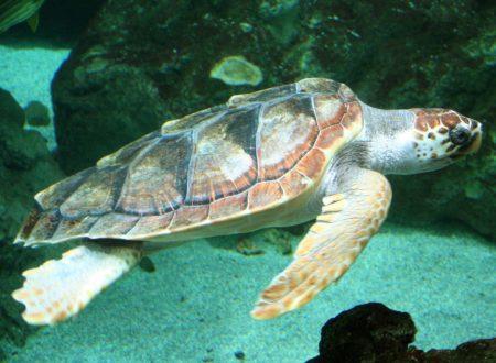 Delfini e tartarughe prediligono il mare della Costiera (Video)